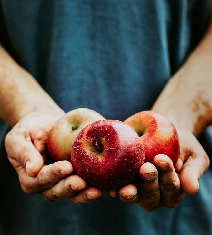 Apple picking at Chudeligh's